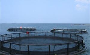 Trabajos submarinos y sistemas antipolucións