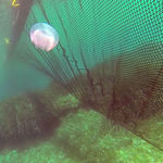 barrera antimedusas / flotante / para aguas tranquilas
