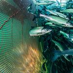 red para la acuicultura / para jaula de pesca