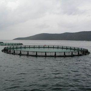jaula de pesca para la acuicultura / de PEHD / flotante