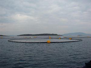 jaula de pesca para la cría de atún / para la acuicultura / flotante