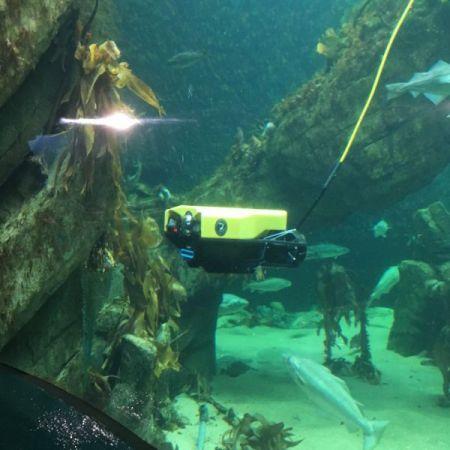 ROV submarino de intervención / de observación