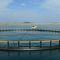 jaula de pesca para la acuiculturaSTANDARD Toford Aquaculture